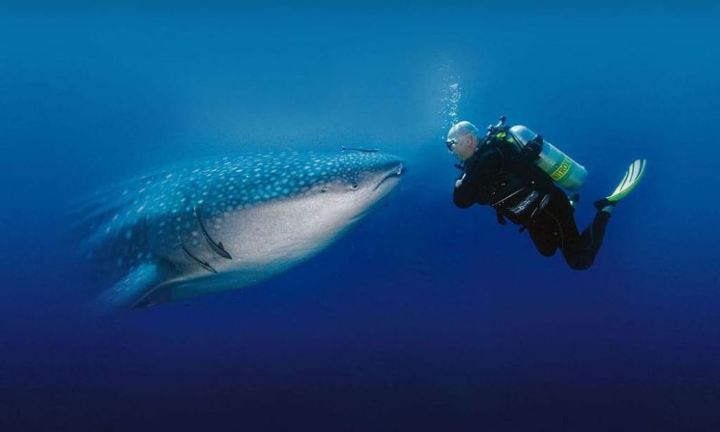 diving-whale-shark-traveling-to-Thailand