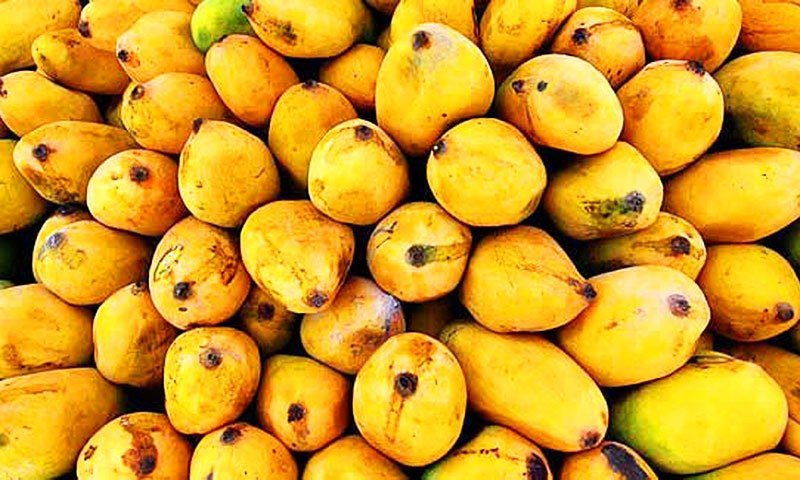 mangoes-traveling-to-thailand