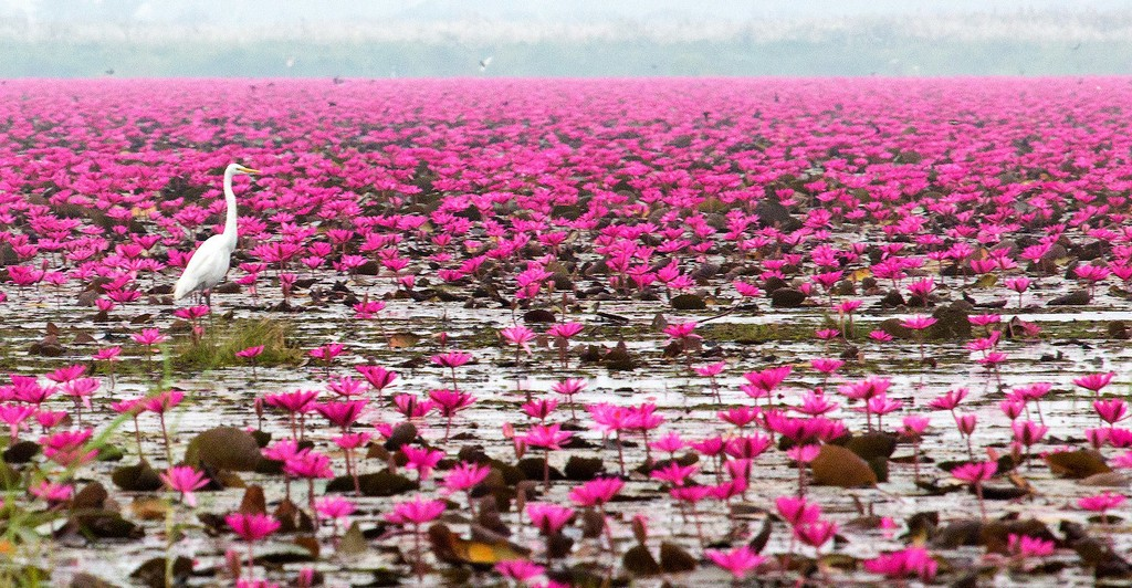 pink-lake-traveling-to-thailand
