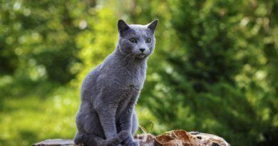 know cat breeds - trendmut - 2021