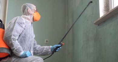 professional mold remediation specialist